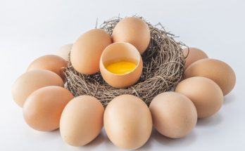 Ilustrasi Telur